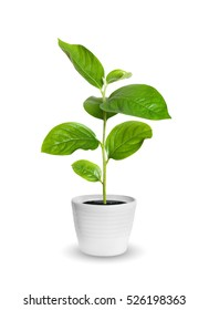 small green seedling in a flowerpot isolated