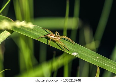 small green spider on the grass