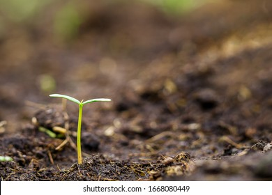 Small green sprout seedling in soil and blur background with text space, finance saving concept, ecology theme