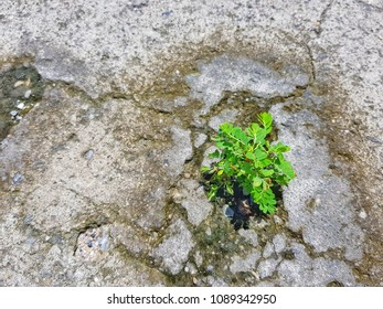 Small green tree on the crack of cement floor