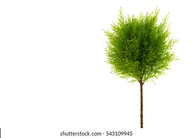 Small green tree on a white background, with copy space for text