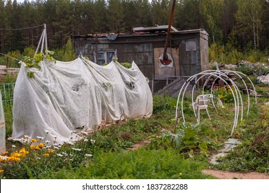 A small greenhouse for cucumbers in the garden. Vegetable patch with seedlings covered with spunbond to keep humidity and against ground frost in the garden.