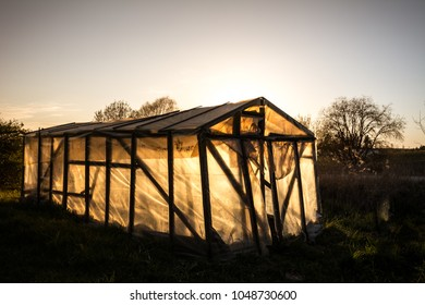 Small greenhouse  in a garden in summer at sunset. Sun behind illuminates greenhouse.