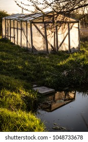 Small greenhouse with pond and reflection in a garden in summer at sunset. Green trees and grass in surrounding.