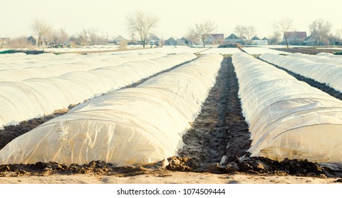 small greenhouses for vegetables in the field. Agriculture. agroculture. Farming