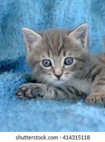 Small grey tabby kitten lying down with paw pads showing