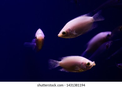 2d4d30ccd1f3 Fish Kiss Images, Stock Photos & Vectors | Shutterstock