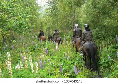 Small group of tourist riding on horseback through green forest, Glenorchy, Queenstown, South Island, New Zealand