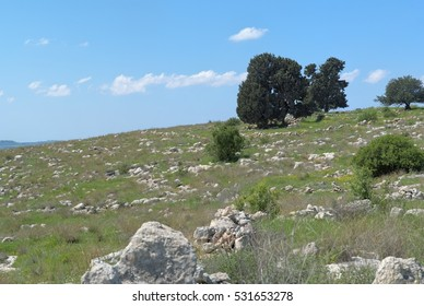 Small group of trees of the hill