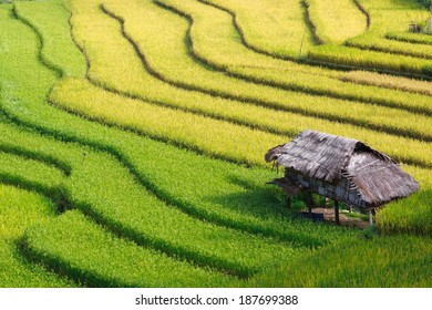Small guardhouse beside terraces field in Mu Cang Chai, Vietnam