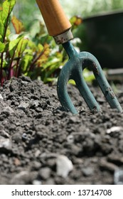 A small hand held garden fork,set in the ground with visible young beetroot growing in background.