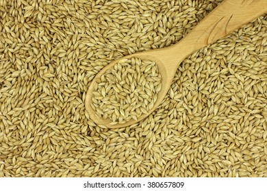 Canary Seed Images Stock Photos Vectors Shutterstock