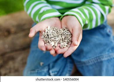 Small hands holding a sunflower seeds in summer