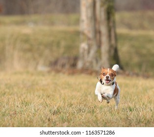 Small happy dog running in the grass