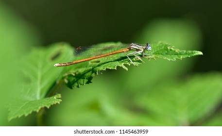 Small happy female dragonfly on leaves