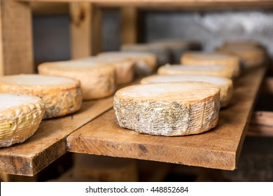 Small heads of young goat cheese  with a blue mold on a wooden shelf in a cellar on a private farm. Cheese manufacture