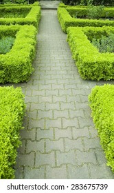 Small hedges in a garden