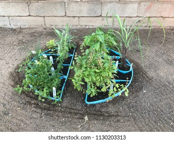 Small herb garden in a blue round structure