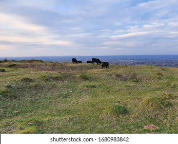 A small herd of cows lazily chew on sod and cud in the English countryside. They provide an almost perfect division between the green of the fresh grass they are enjoying and the overcast, yet solidl