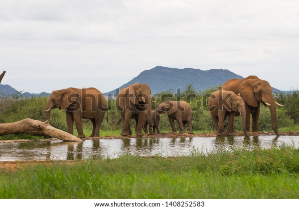 small-herd-family-african-elephants-600w