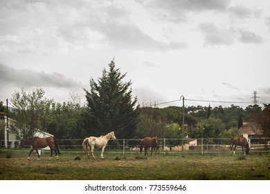 Small herd of four horses grazing on the farm with a nice landscape background