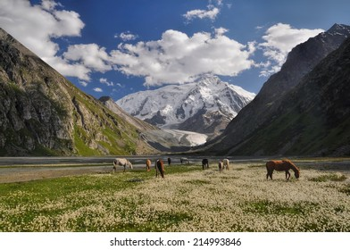 A small herd of horses grazing near Issyk-Kul Lake in Kyrgyzstan