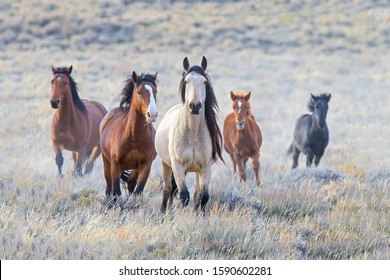 A small herd of wild horses taking a good close look at me