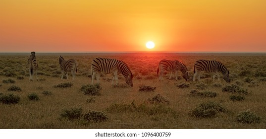 Small herd of zebra in front of the rising sun in Namibia