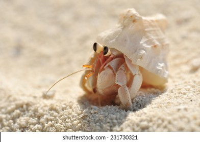 small hermit crab in the sand