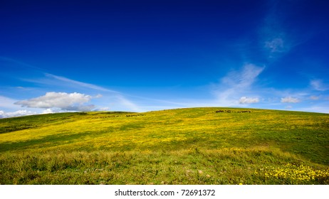 A small hill is covered with yellow flowers under clear blue sky