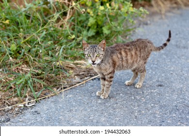 Small homeless cat on a yard