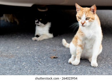 Small homeless cats on a yard
