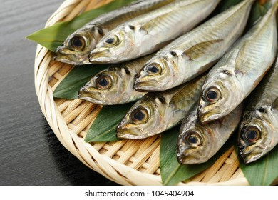 small horse mackerel