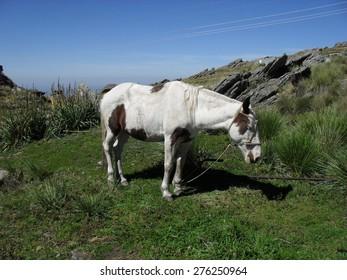 Small horse near Champaqui Hill in Cordoba, Argentina