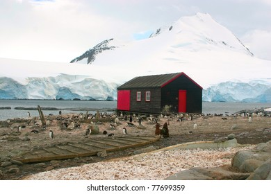 Small house in British Antarctic base Port Lockroy surrounded with penguins