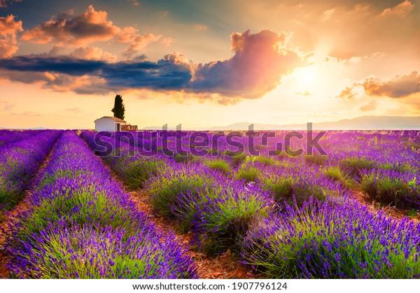 Pequeña casa con ciprés en campos de lavanda al amanecer cerca de Valensole, Provenza, Francia. Hermoso paisaje de verano.
