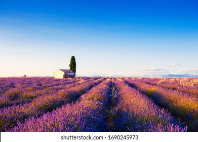 Small house in lavender fields at sunset near Valensole, Provence, France. Beautiful summer landscape.