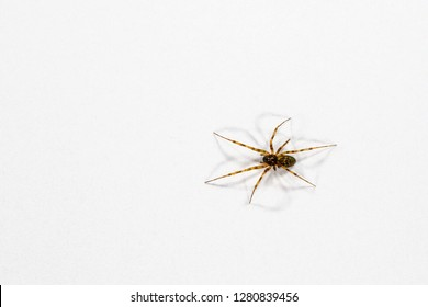 Small house spider walking across paper with shadows.