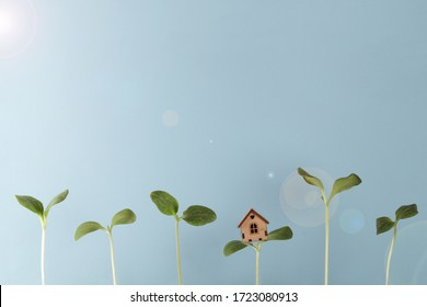 small house stand on sprout with growing young plants and glare of sun on blue background , environment and ecology care. growth concept. copy space
