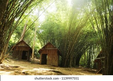small hut in bamboo jungle