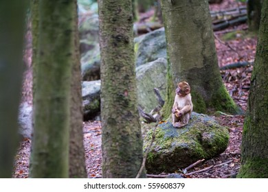 A small infant monkey sitting in a forest all alone