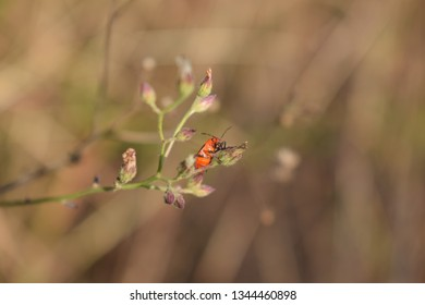 Small insect in a branch of a plant