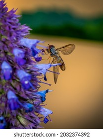 Small insect collecting nectar from blue flower, close-up photo of insect and blue flower