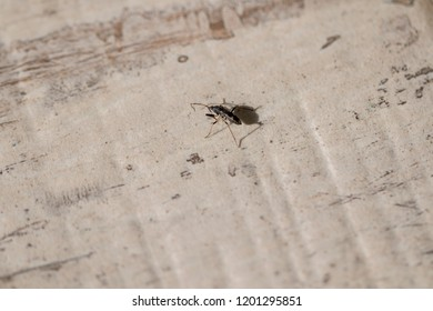 Small insect with two antennas.