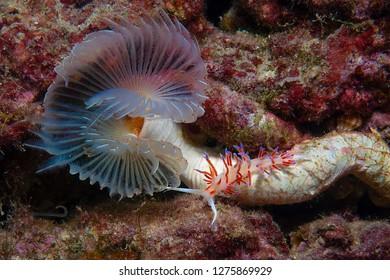 small invertebrate looking food on algae
