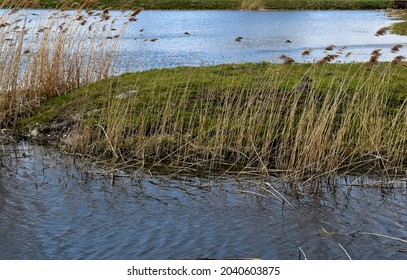 A small island with grass and reeds on the pond.