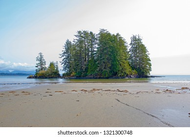 Small island with pine trees in Long Beach, Tofino, a popular destination in Vancouver Island, Canada