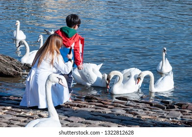 Small kid feeding swans by the river