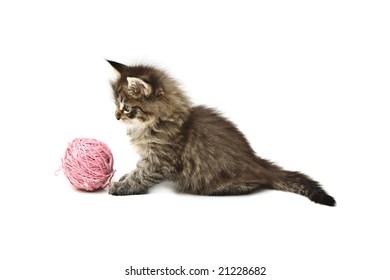 small kitten against white background