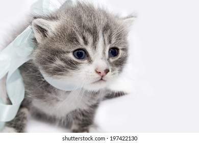 Small kitten with a bow